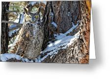 Great Horned Owl On Snowy Branch Greeting Card