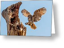 Great Horned Owl Returning To Her Nest Greeting Card