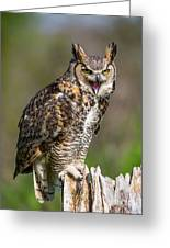Great Horned Owl Screeching Greeting Card