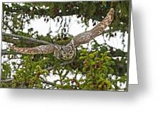 Great Horned Owl Takeoff Greeting Card