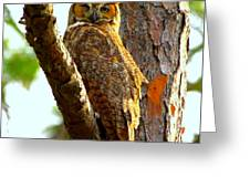 Great Horned Owl Wink Greeting Card