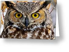 Great Horned Stare Greeting Card