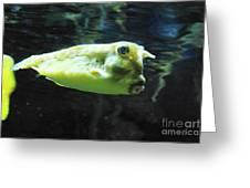 Great Longhorn Cowfish Swimming Along Underwater Greeting Card