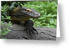 Great Look At A Komodo Dragon With Long Claws Greeting Card