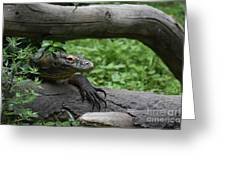 Great Look At A Komodo Monitor Lizard With Long Claws Greeting Card