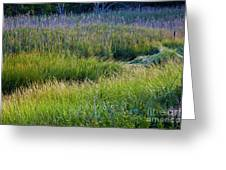 Great Marsh Grass Greeting Card
