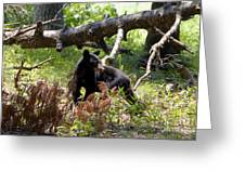 Great Smoky Mountain Bear Greeting Card