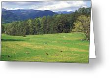 Great Smoky Mountains Deer Grazing In Field Greeting Card