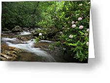Great Smoky Mountains Rosebay Rhododendron Greeting Card