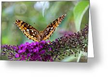 Great Spangled Fritillary Butterfly Greeting Card