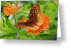 Great Spangled Fritillary I Greeting Card