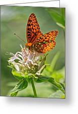 Great Spangled Fritillary On Bee Balm Greeting Card