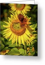 Great Spangled Fritillary On Sunflower Greeting Card