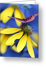 Great Spangled Fritillary On Yellow Coneflower Greeting Card