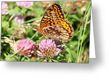 Great Spangled Frittilary Greeting Card