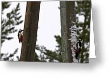 Great Spotted Woodpeckers Greeting Card