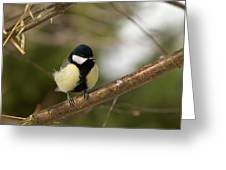 Great Tit Male 2 Greeting Card
