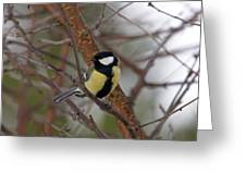 Great Tit Male Greeting Card
