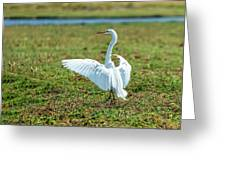 Great White Egret Ahoy Greeting Card
