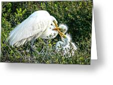 Great White Egret Family Greeting Card