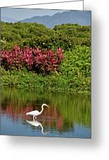 Great White Egret Fishing In A Pond With Tropical Plants And Sie Greeting Card