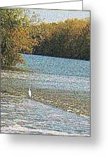 Great White Egret Fishing  Greeting Card