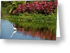 Great White Egret Hunting In A Pond In Mexico With Iguana And Re Greeting Card
