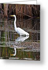 Great White Egret Greeting Card by James Marvin Phelps