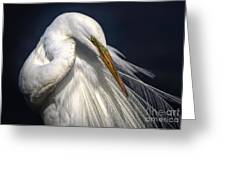 Great White Egret Print One Greeting Card