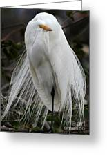Great White Egret Windblown Greeting Card