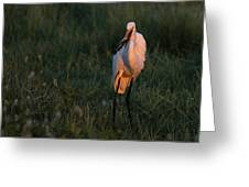 Great White Egret With Armored Catfish Greeting Card