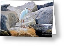 Great White Heron Of Florida Greeting Card