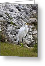Great White Heron Race Greeting Card