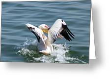 Great White Pelican In Flight Greeting Card