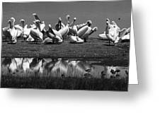 Great White Pelicans, Lake Nakuru, Kenya Greeting Card