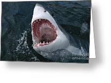 Great White Shark Jaws Greeting Card by Mike Parry
