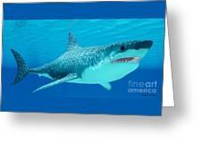 Great White Shark Undersea Greeting Card