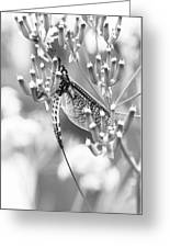 Great Wings  Black And White Dragonfly Greeting Card
