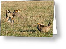 Greater Prairie Chicken Males 2 Greeting Card