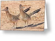 Greater Roadrunner Bird Greeting Card