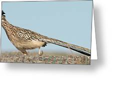Greater Roadrunner On The Hunt Greeting Card
