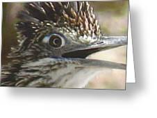 Greater Roadrunner Portrait Greeting Card