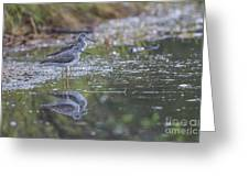 Greater Yellowlegs Reflected Greeting Card