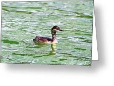 Grebe On Green Water Greeting Card