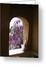 Greece Wisteria Through Arched Window Greeting Card