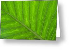 Green Abstract No. 4 Greeting Card