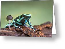 Green And Black Poison Dart Frog Greeting Card