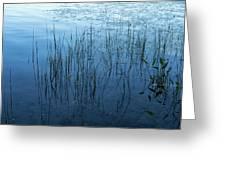 Green And Blue Serenity - Smooth Wetland Morning Greeting Card