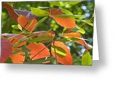 Green And Orange Leaves Greeting Card