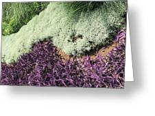 Green And Purple Greeting Card